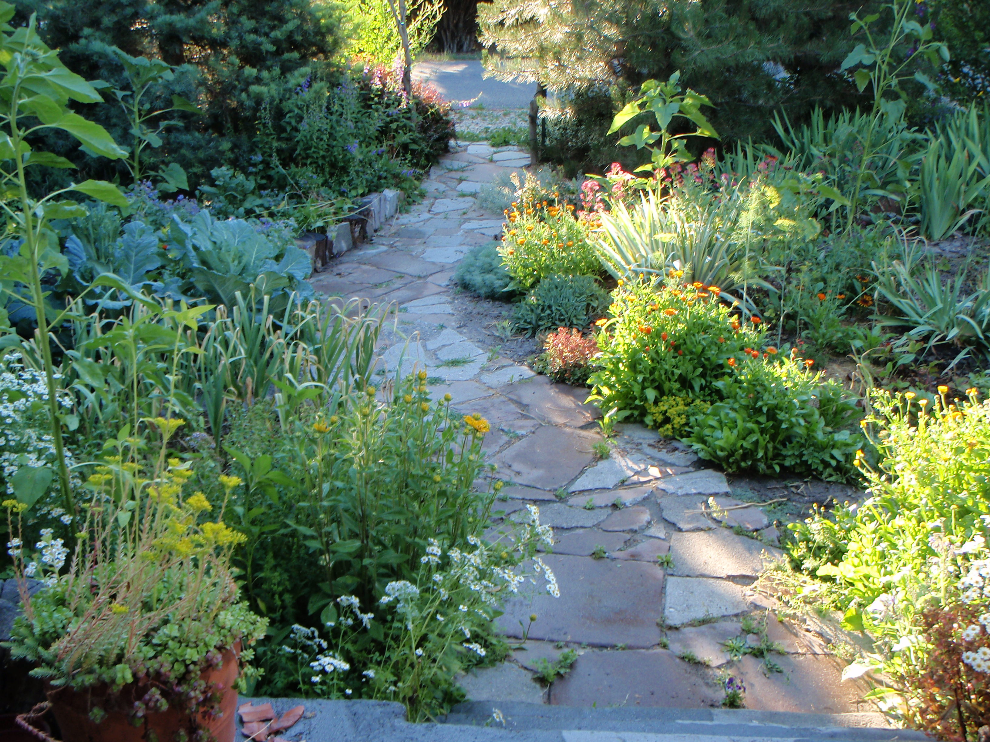 Front Yard Gardens From Our Readers Cast Iron